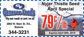 Nyjer Thistle Seed April Special